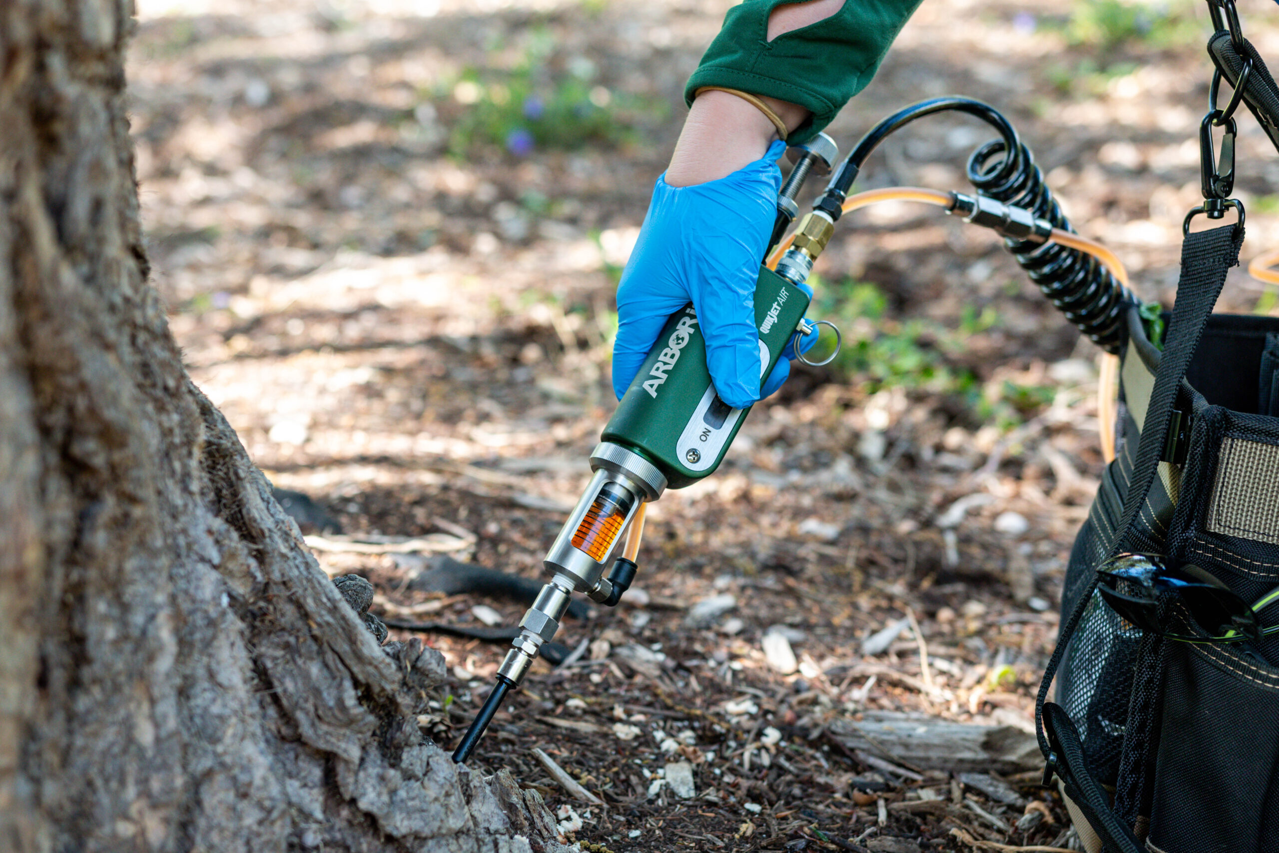 Injecting Insecticide Into A Hemlock Tree