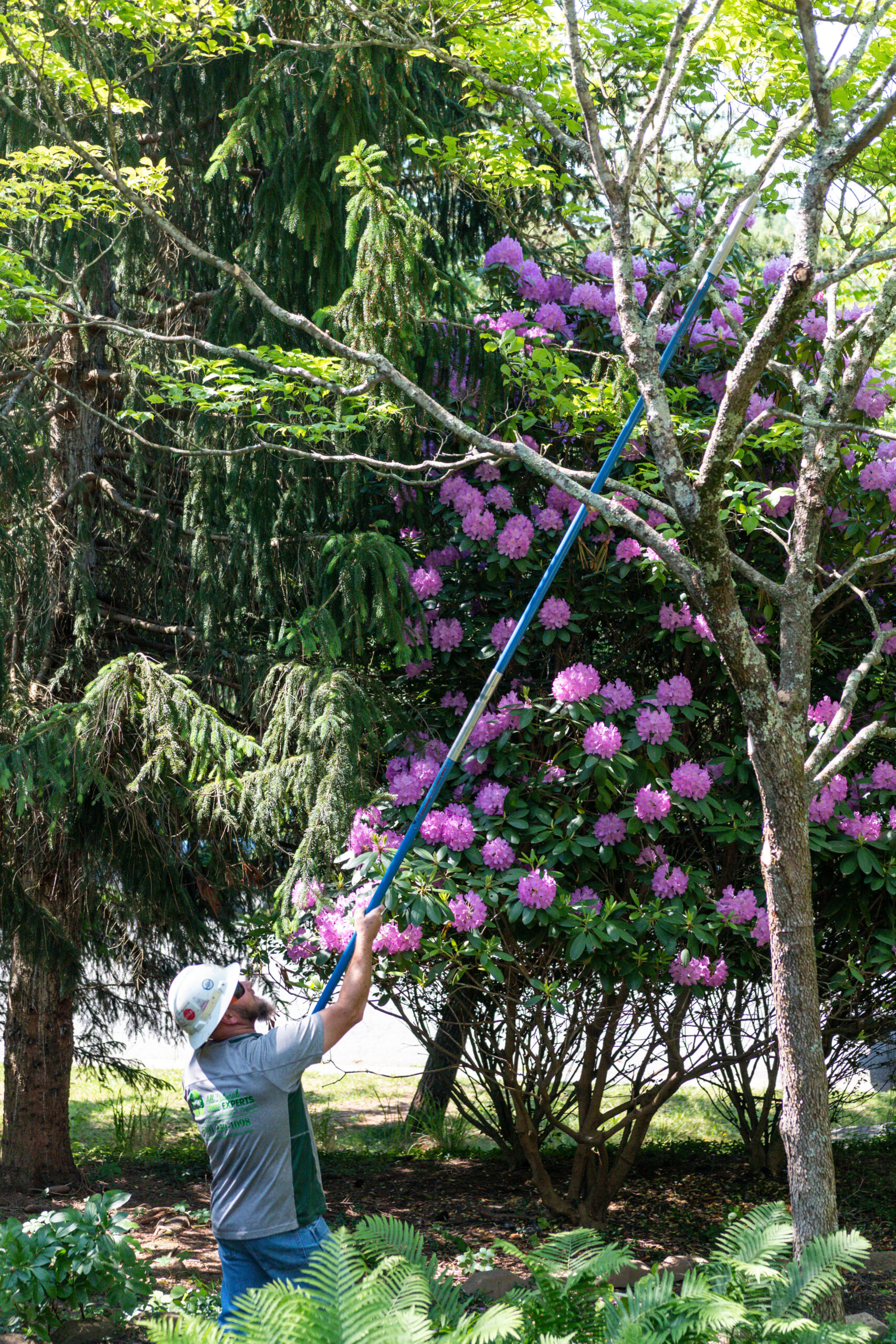 Pruning Using A Pole Saw