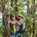 Pruning a Flowering Dogwood