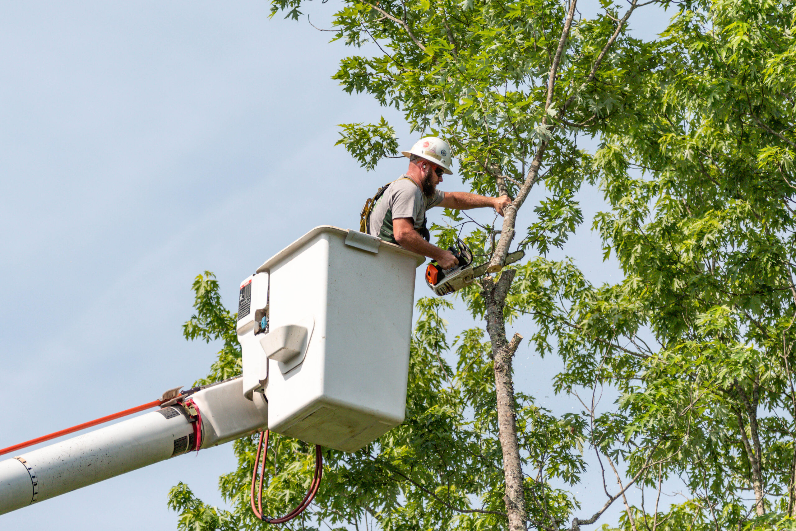 Cutting Off A Branch From A Bucket Truck