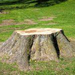fresh-tree-removal-stump_orig
