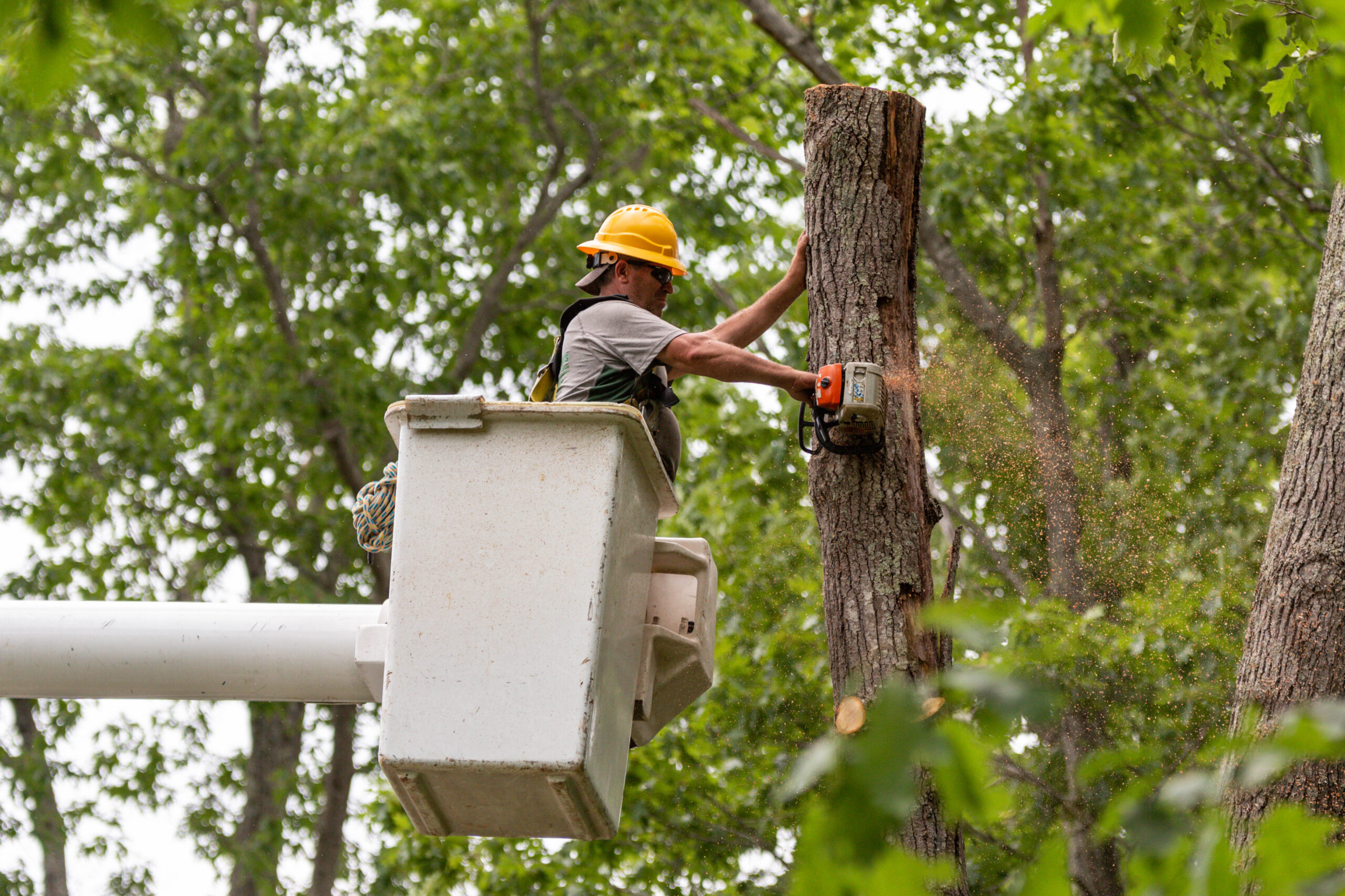 Cutting The Tree Into Pieces From A Bucket Truck