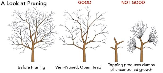Tree-Pruning-diagram